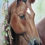 Голова лошади, 24х33, двп, масло, 2011
